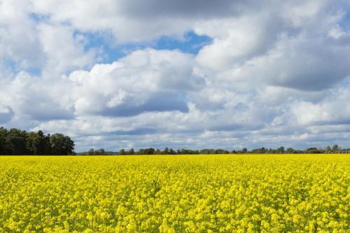 Herbstliches Feld bei Grefrath